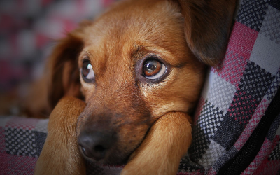 image for Puppy Eyes